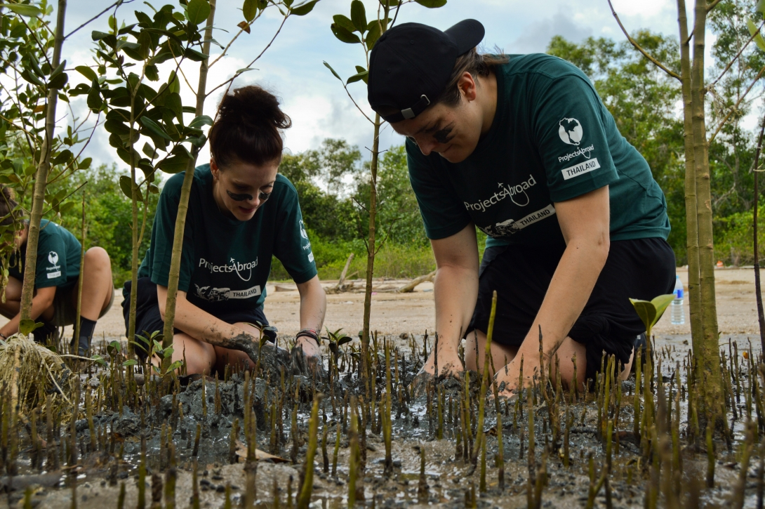 Conservation volunteers transplanting mangroves in Thailand in their High School Specials.